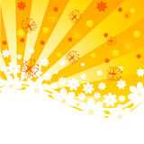 orange background with daisies Royalty Free Stock Images