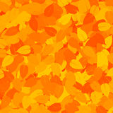 Orange background with leaves Royalty Free Stock Image