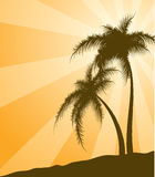Orange  background with palm trees Stock Photos