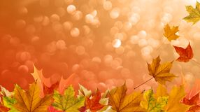 Orange background on the theme of autumn, falling leaves of maple