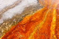 Orange Bacteria Stock Image