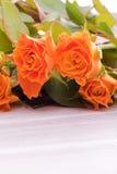 Orange Bakkaratrosen Stockbilder