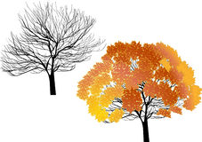 Orange and bare trees  on white Stock Photography
