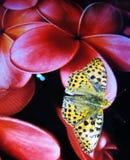 Orange Basisrecheneinheit hockte auf der Blume eines Bildschirms Lizenzfreie Stockbilder