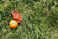 Orange Basketball auf grünem Gras Stockfoto