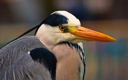 Orange beak bird Stock Photo