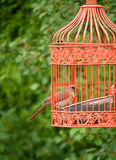 Orange Beak Bird in Outdoor Cage Stock Photos