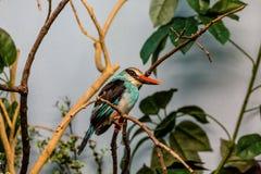 Orange Beak on Tropical Bird Royalty Free Stock Photos