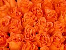 Orange beauty royalty free stock photography