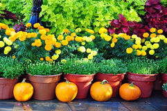 Orange Beauty. Fall decor in the beautiful city of Natchitoches, Louisiana Stock Photo