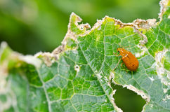 Orange beetle in green nature Stock Photography