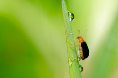 Orange beetle in green nature Stock Images