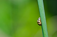 Orange beetle in green nature or in the garden Stock Images