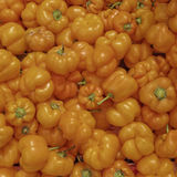 Orange bell peppers closeup Royalty Free Stock Image