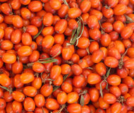 Orange berries of sea buckthorn closeup Stock Photos