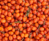 Orange berries of sea buckthorn closeup Stock Photos