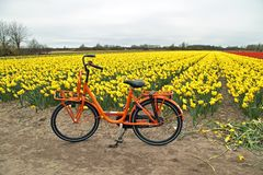 Orange bike and flower fields in the Netherlands Stock Photography