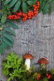 Orange birch bolete mushrooms ai wooden background. Leccinum versipelle - orange birch bolete mushrooms ai wooden background with lingonberry and leaf as s post Stock Photo