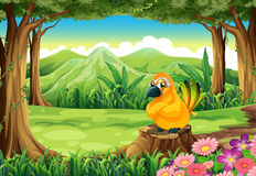 An orange bird above the stump at the forest Stock Photo