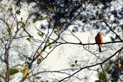 Orange bird, Poland stock photos