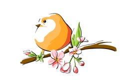 Orange bird. Cute orange bird on branch Stock Photos