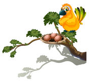 An orange bird watching the eggs Stock Image