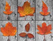 orange Blätter Stockbilder