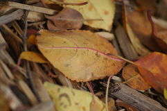Orange Blätter an einem Fall-Tag Stockbilder