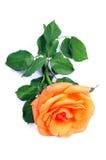 Orange blühende Blume Lizenzfreie Stockbilder