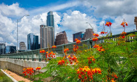 Orange blüht Nachmittags-Perfektions-Sommerzeit Bliss Downtown Skyline Cityscape Austins Texas stockbild