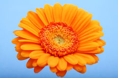 Orange Blüte Stockbild