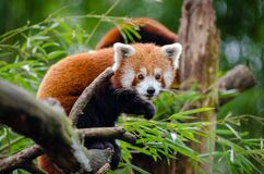 Orange Black Animal on Tree Branch stock photo