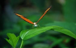 Orange and Black Butterfly on Green Leaf Stock Image