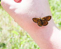 Orange and black butterfly on human hand. selective focus Royalty Free Stock Photos
