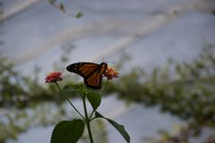 An orange and black butterfly landing on a flower stock photos