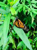 Orange and black butterfly. On a green plant stock photos