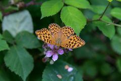 Butterfly. Orange and black butterfly on a purple flower in the forest stock image