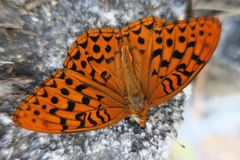 Orange and black colored moth, granite stone background. Detail of moth found in Sequoia National Park, California Stock Photography