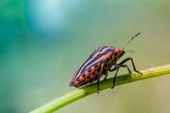 Orange and Black Insect Royalty Free Stock Image