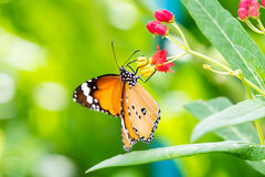 Orange black pattern butterfly on bunch Stock Photography