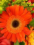 Orange and Black Petaled Flower in a Close Up Photography during Daytime Stock Photography