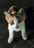 Orange, black and white cat Stock Photo
