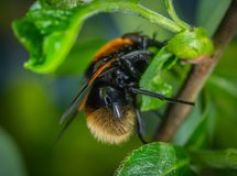 Orange and Black Winged Insect on Green Leaf Plant Stock Image