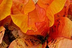 Orange blad Fotografering för Bildbyråer