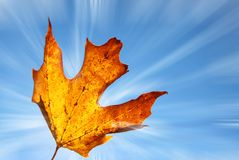 Orange blad med solstrålar royaltyfri fotografi