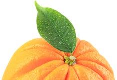Orange Blatt Stockfotos