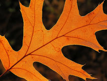 Orange Blatt Stockfoto