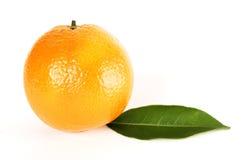 Orange Blatt Lizenzfreie Stockfotos