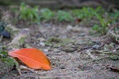 Orange Blatt aus den Grund lizenzfreie stockbilder