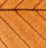 Orange Blatt des Falles adert Hintergrundbeschaffenheit Lizenzfreies Stockbild